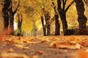 outono da vida